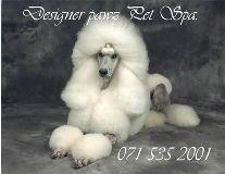 Fotos de Designer Pawz Pet Spa