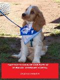 Foto de St Francis Veterinary Hospital,Edenvale